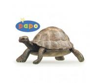 50013 Черепаха