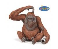 50120 Орангутанг