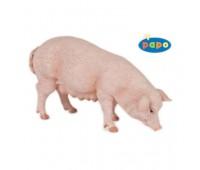 51135 Свинья