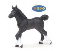 51530 Жеребенок Англо-Арабской лошади