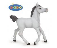 51538 Жеребенок белой арабской лошади